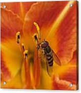 Lily And Bee Acrylic Print