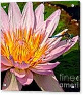 Lily And Dragon Fly Acrylic Print by Nick Zelinsky