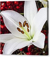 lily and Pyracantha Acrylic Print by Garry Gay