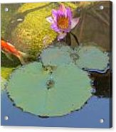 Lily And The Gold Fish Acrylic Print