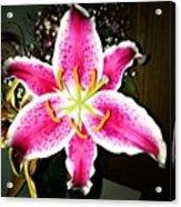 #lily #closeup #pretty #flower Acrylic Print