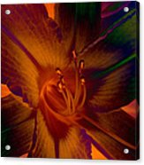 Lily Colors Acrylic Print
