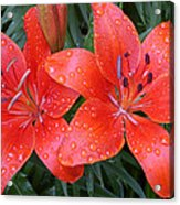 Lily Duet After The Rain Acrylic Print