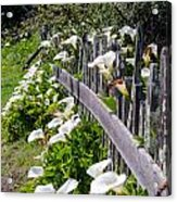 Lily Fence Acrylic Print