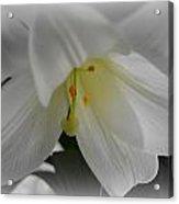 Lily Focal Acrylic Print