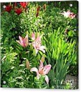 Lily Garden Acrylic Print