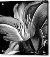 Lily In Black In White Acrylic Print by Camille Lopez