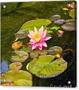 Lily In Pond Acrylic Print