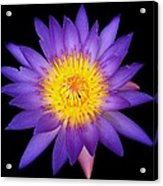Lily In The Void Acrylic Print