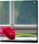 Lily In Window Acrylic Print by Tammy Smith