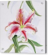 Lily Acrylic Print by Izabella Godlewska de Aranda