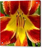 Lily Lights Acrylic Print