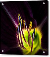Lily Of The Forest Acrylic Print