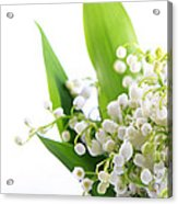 Lily Of The Valley Art Acrylic Print