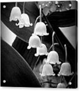 Lily Of The Valley Black And White Acrylic Print