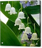 Lily Of The Valley Green Acrylic Print