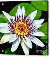 Lily On The Water Acrylic Print