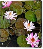 Lily Pad Haven Acrylic Print