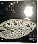 Lily Pad In The Sun Acrylic Print