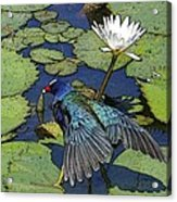 Lily Pad With Bird Acrylic Print