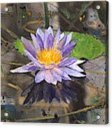 Lily Pad With Purple Flower Acrylic Print