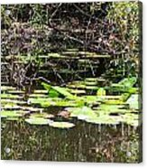 Lily Pads 1 Acrylic Print