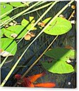 Lily Pads 2 Acrylic Print