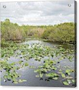 Lily Pads Floating On Water, Anhinga Acrylic Print