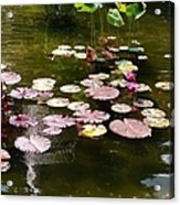 Lily Pads In The Fountain Acrylic Print