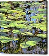 Lily Pads In The Swamp Acrylic Print