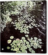 Lily Pads On Dark Water Acrylic Print