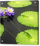 Lily Pads Purple Acrylic Print