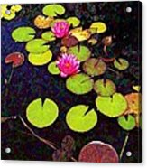 Lily Pads With Pink Flowers - Square Acrylic Print