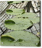 Lily Pads With Reflection Of Conservatory Roof Acrylic Print
