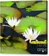 Lily Pond Bristol Rhode Island Acrylic Print