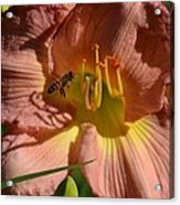 Lily Seduction Acrylic Print