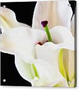 Lily Solitaire Acrylic Print
