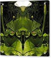 Lily Symmetry  Acrylic Print