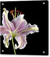 Lily Up Close Acrylic Print