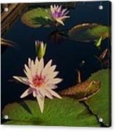 Lily White Monet Acrylic Print
