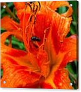 Lily With A Friend Acrylic Print by Mark Malitz