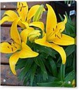 Lily Yellow Flower Acrylic Print