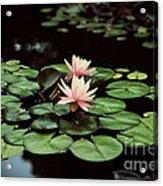 Lilypad And Lotus Acrylic Print
