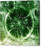 Lilypad - Fractal Acrylic Print