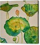 Lilypads 1 Acrylic Print