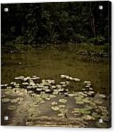 Lilypads At The Dock Acrylic Print