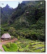Limahuli Taro Fields In Kauai Acrylic Print
