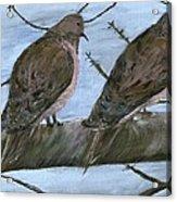 Limbirds Acrylic Print