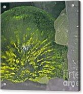 Limon Arcs Acrylic Print