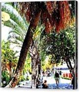 Lincoln Road In Miami Beach Acrylic Print